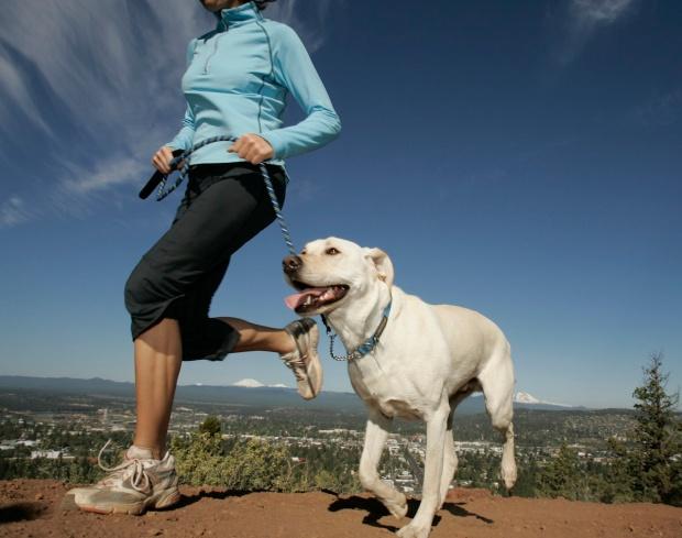 dog-training-ideas08